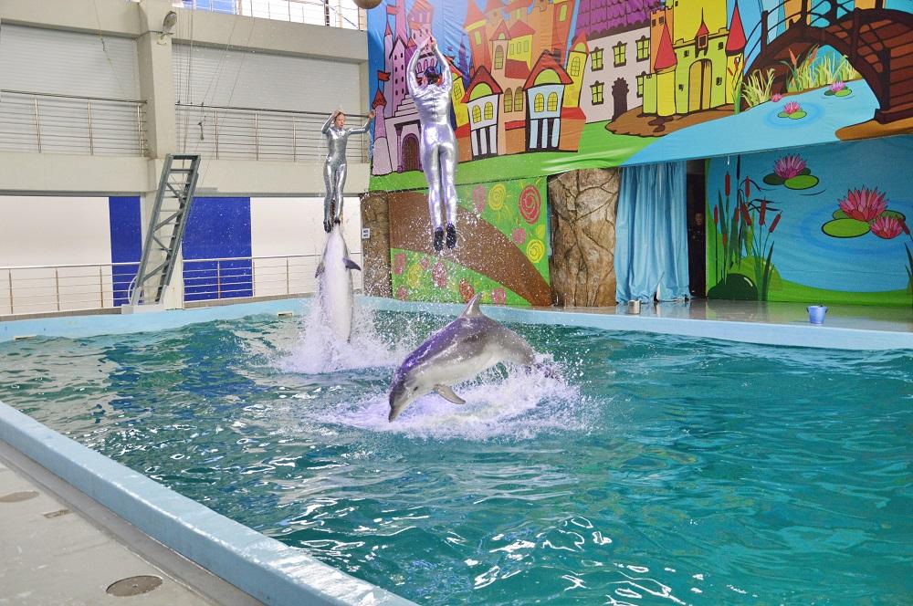 дельфинарий лазаревское фото